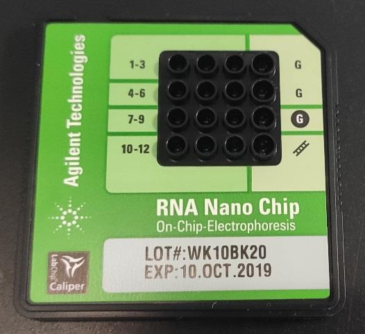 5. Electrophoresis of RNA* Theoretical Foundation Being able to isolate pure and intact RNA is essential for many applications such as reverse transcriptase PCR, northern blotting, RNase protection