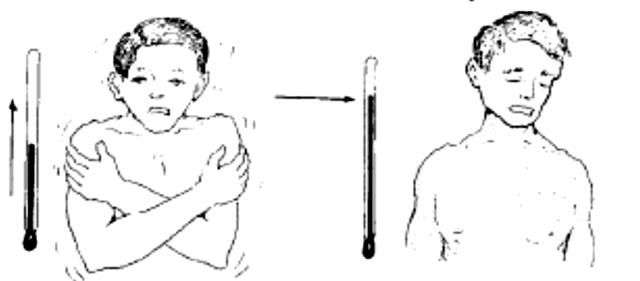 3. Finally the person begins to sweat, and his temperature goes down. After an attack, the person feels weak, but may feel more or less OK. Figura 10 (Extraída de Werner et al.