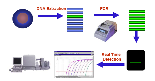 Real time PCR Real-time PCR: uma perspectiva histórica Higuchi et al.