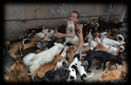 Pets reality There are about 30 millions abandoned pets only in Brazil. Among these amount, about 10 millions are cats and the other 20 are dogs, according to WHO (World Health Organization).