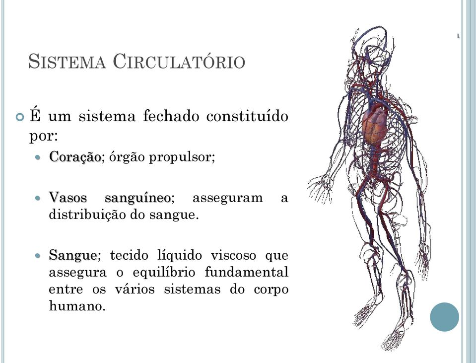distribuição do sangue.