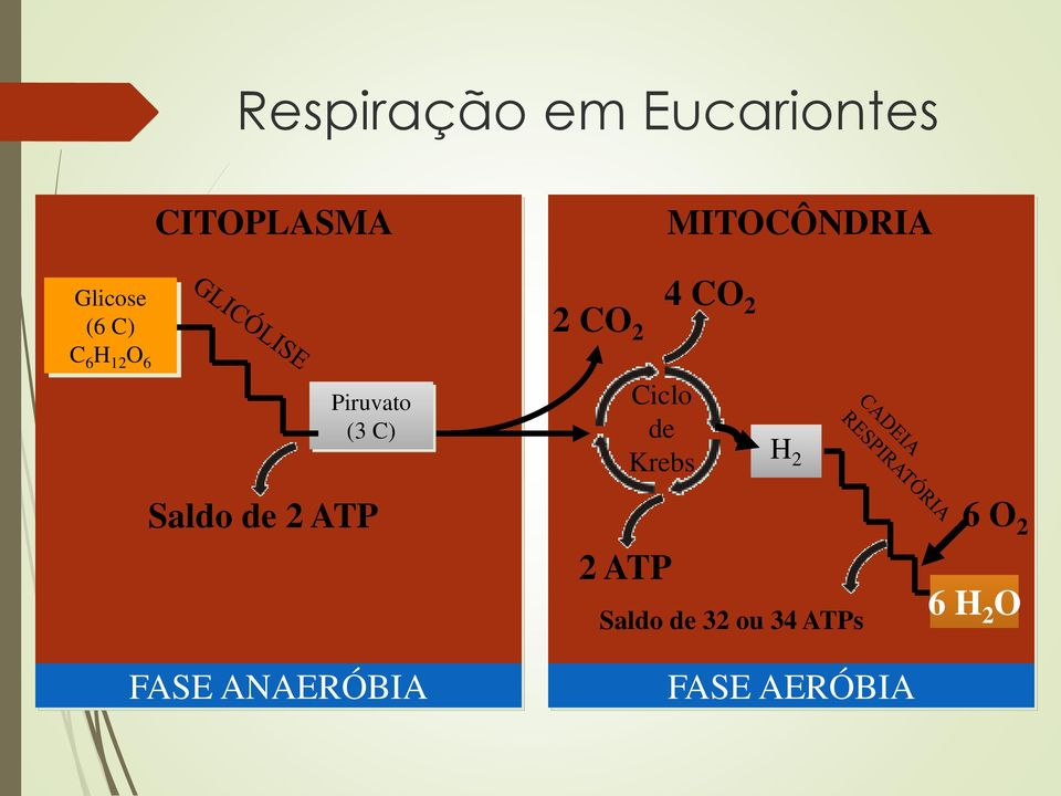 ATP FASE ANAERÓBIA 2 CO 2 Ciclo de Krebs 2 ATP 4 CO