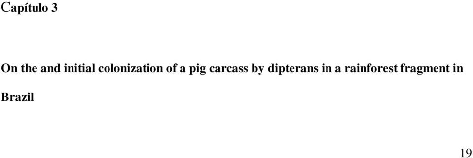 pig carcass by dipterans in