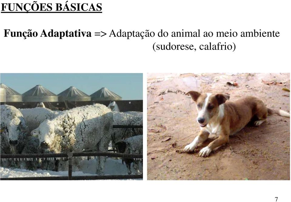 do animal ao meio