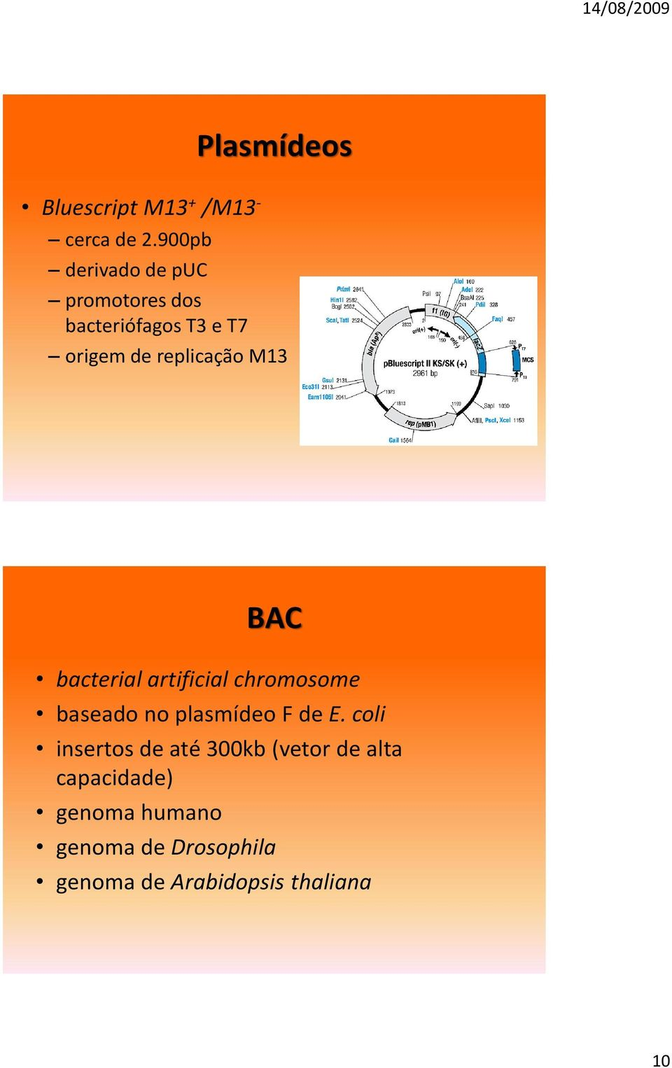 M13 BAC bacterial artificial chromosome baseado no plasmídeo F de E.
