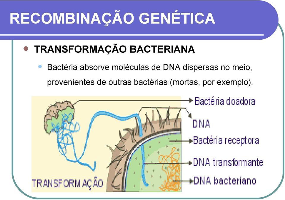 de DNA dispersas no meio, provenientes
