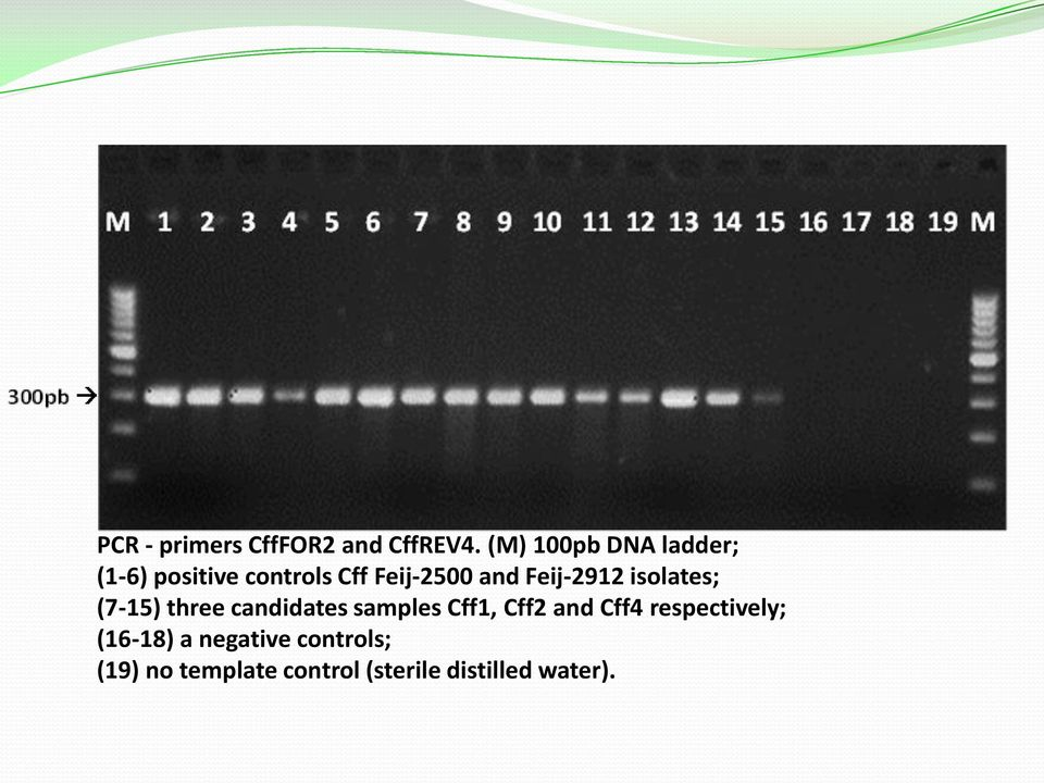Feij-2912 isolates; (7-15) three candidates samples Cff1, Cff2 and