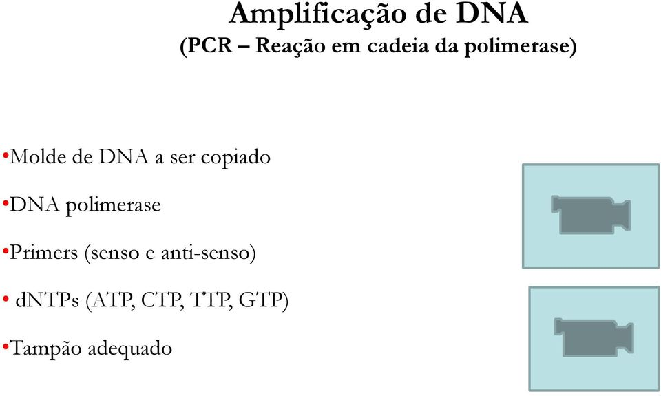 DNA polimerase Primers (senso e