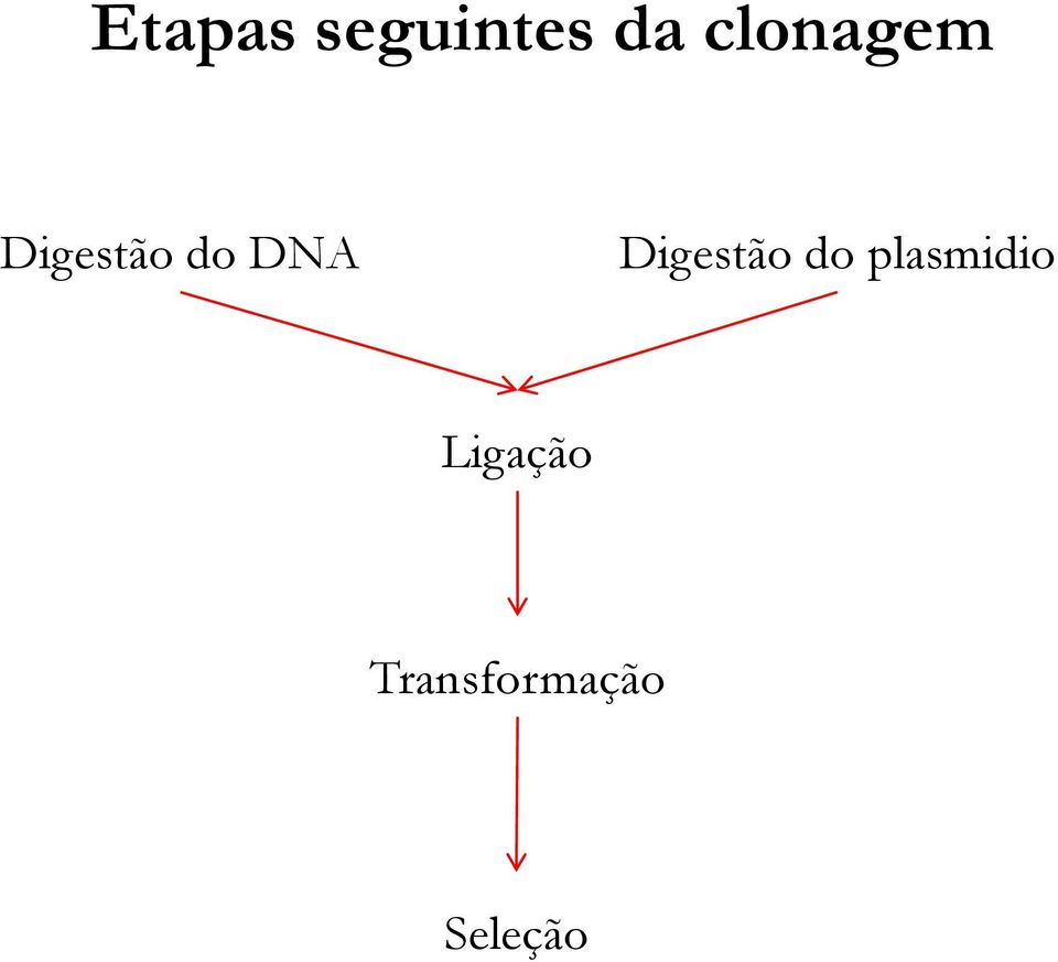 DNA Digestão do