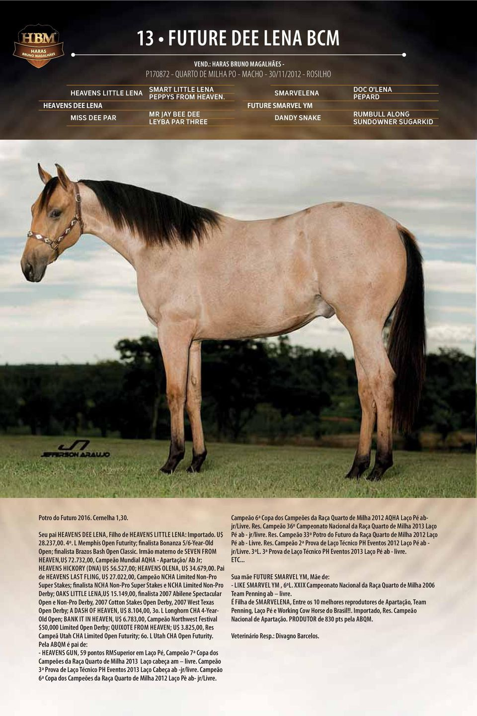 MR JAY BEE DEE LEYBA PAR THREE SMARVELENA FUTURE SMARVEL YM DANDY SNAKE DOC O'LENA PEPARD RUMBULL ALONG SUNDOWNER SUGARKID Potro do Futuro 2016. Cernelha 1,30.