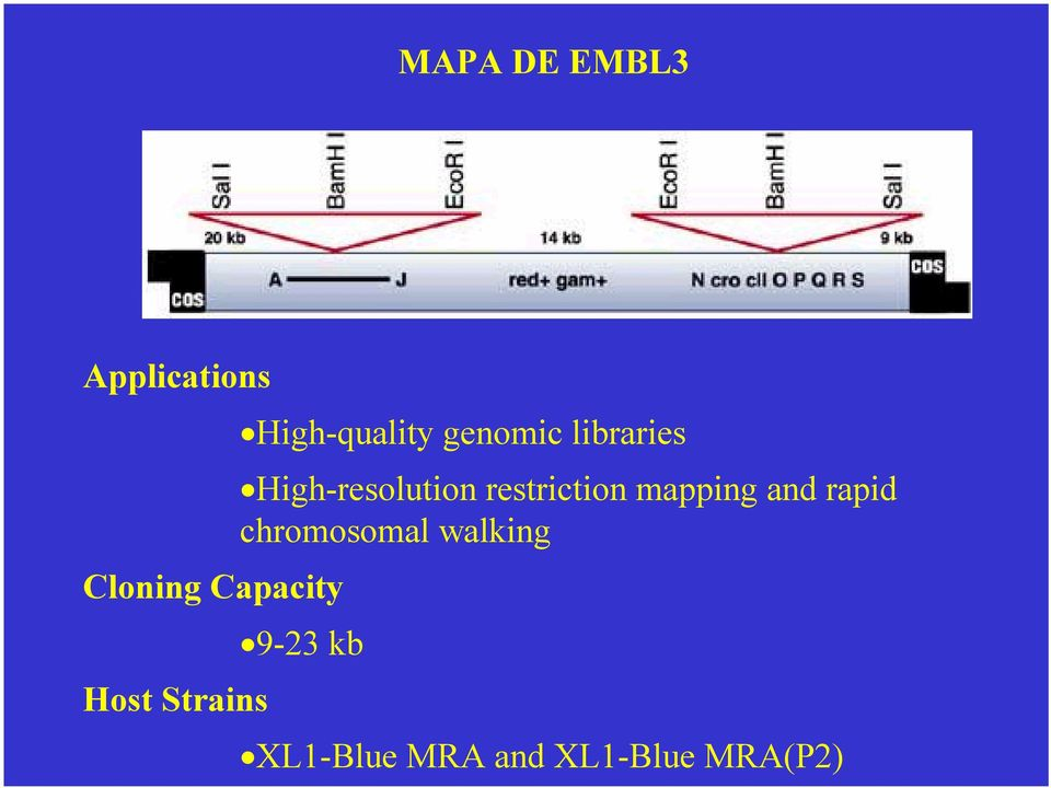 High-resolution restriction mapping and rapid