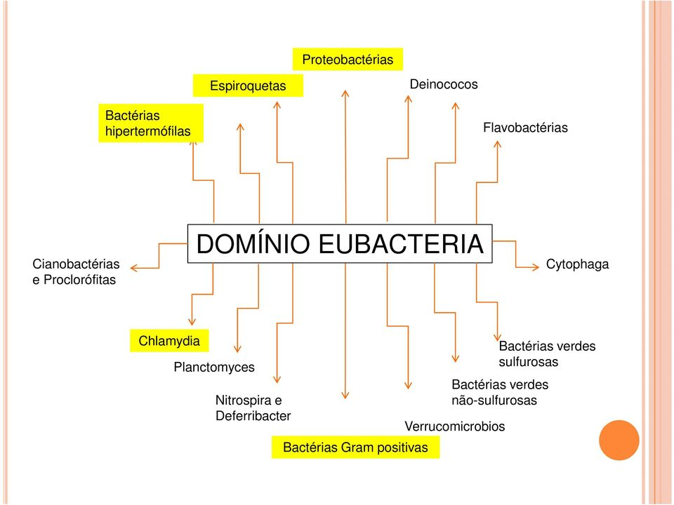 Cytophaga Chlamydia Planctomyces Nitrospira e Deferribacter Bactérias