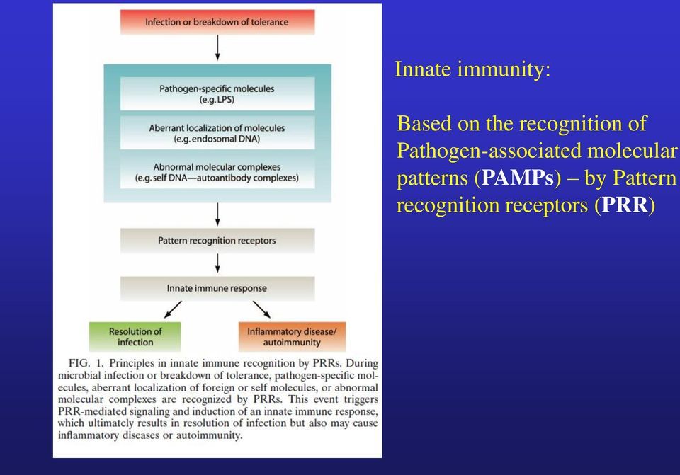 Pathogen-associated molecular -