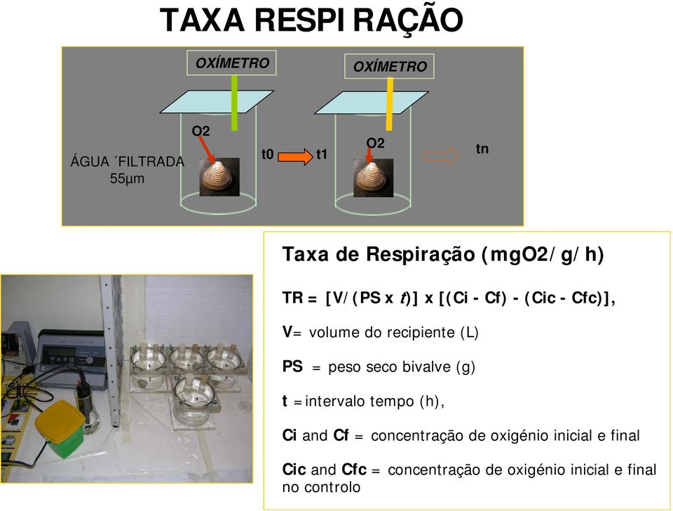 recipiente (L) PS = peso seco bivalve (g) t =intervalo tempo (h), Ci and Cf =