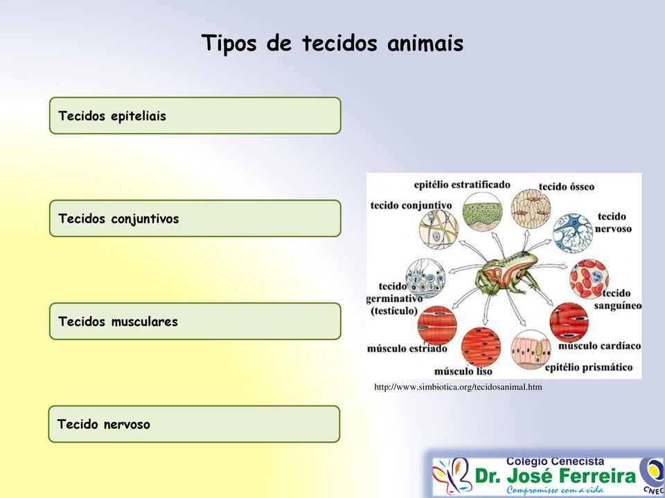 Tecidos musculares http://www.