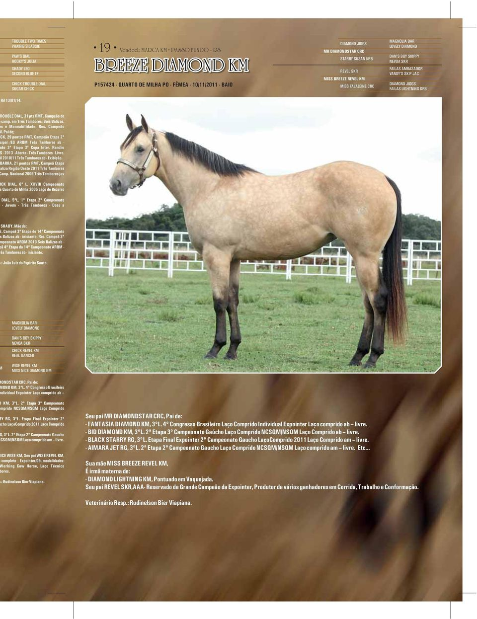 CRC MAGNOLIA BAR LOVELY DIAMOND DAN'S BOY SKIPPY NEVOA SKR FAILAS AMBASADOR VANDY'S SKIP JAC DIAMOND JIGGS FAILAS LIGHTNING KRB Ril 13/01/14. ROUBLE DIAL, 31 pts RMT. Campeão de camp.