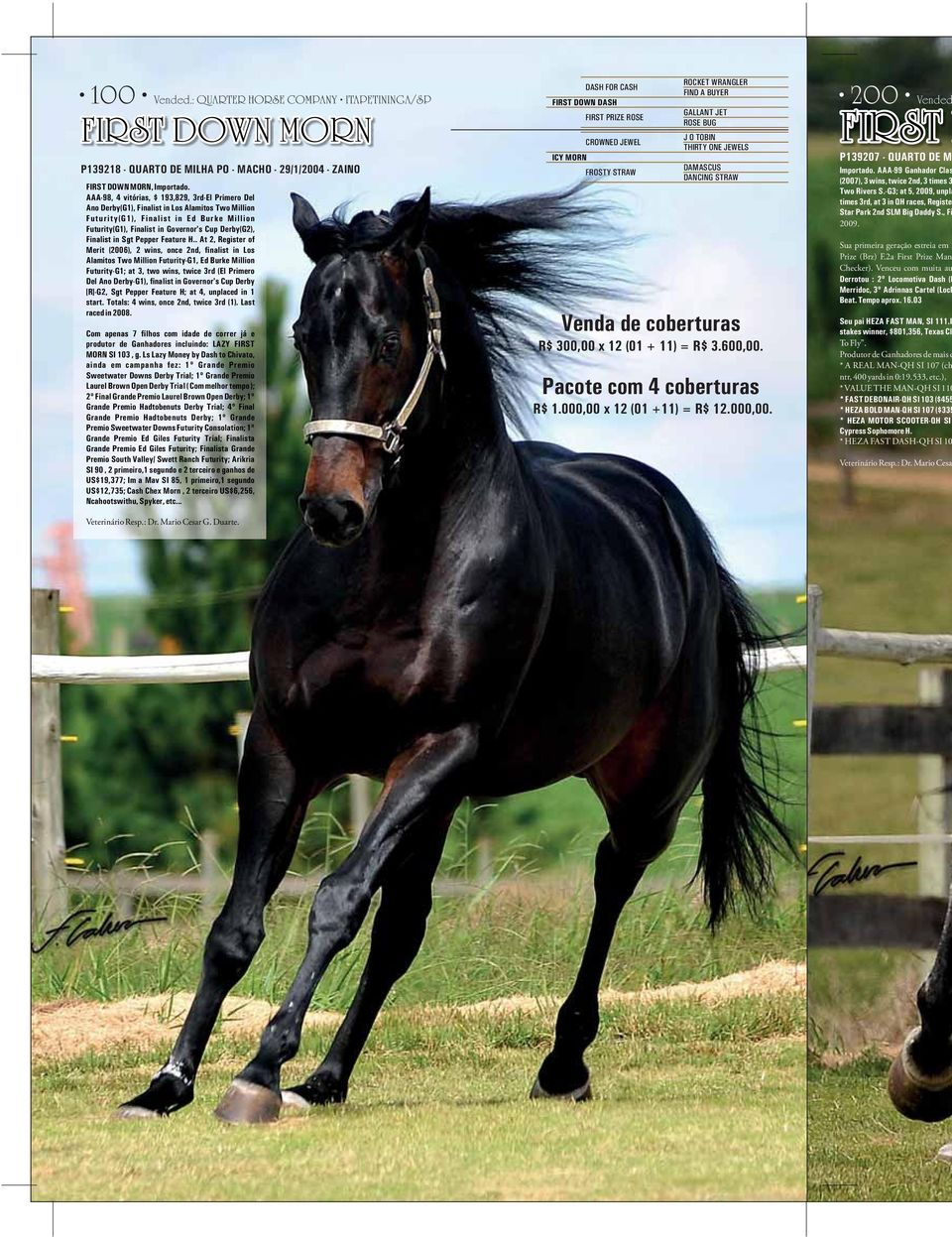 Finalist in Sgt Pepper Feature H.