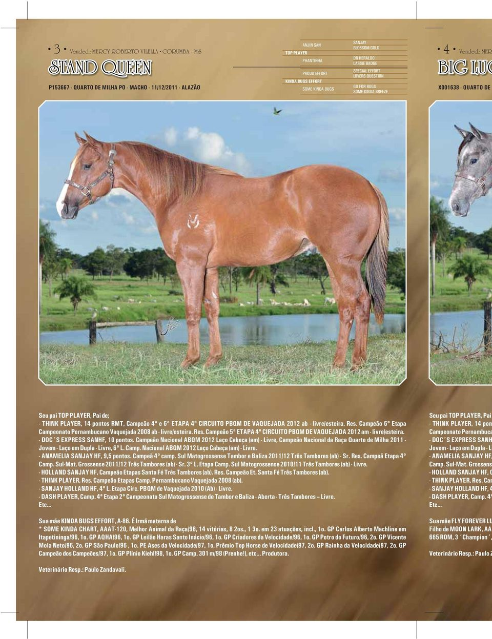 BLOSSOM GOLD DR HERALDO LASSIE BADGE SPECIAL EFFORT LOVERS QUESTION GO FOR BUGS SOME KINDA BREEZE 4 Vended.