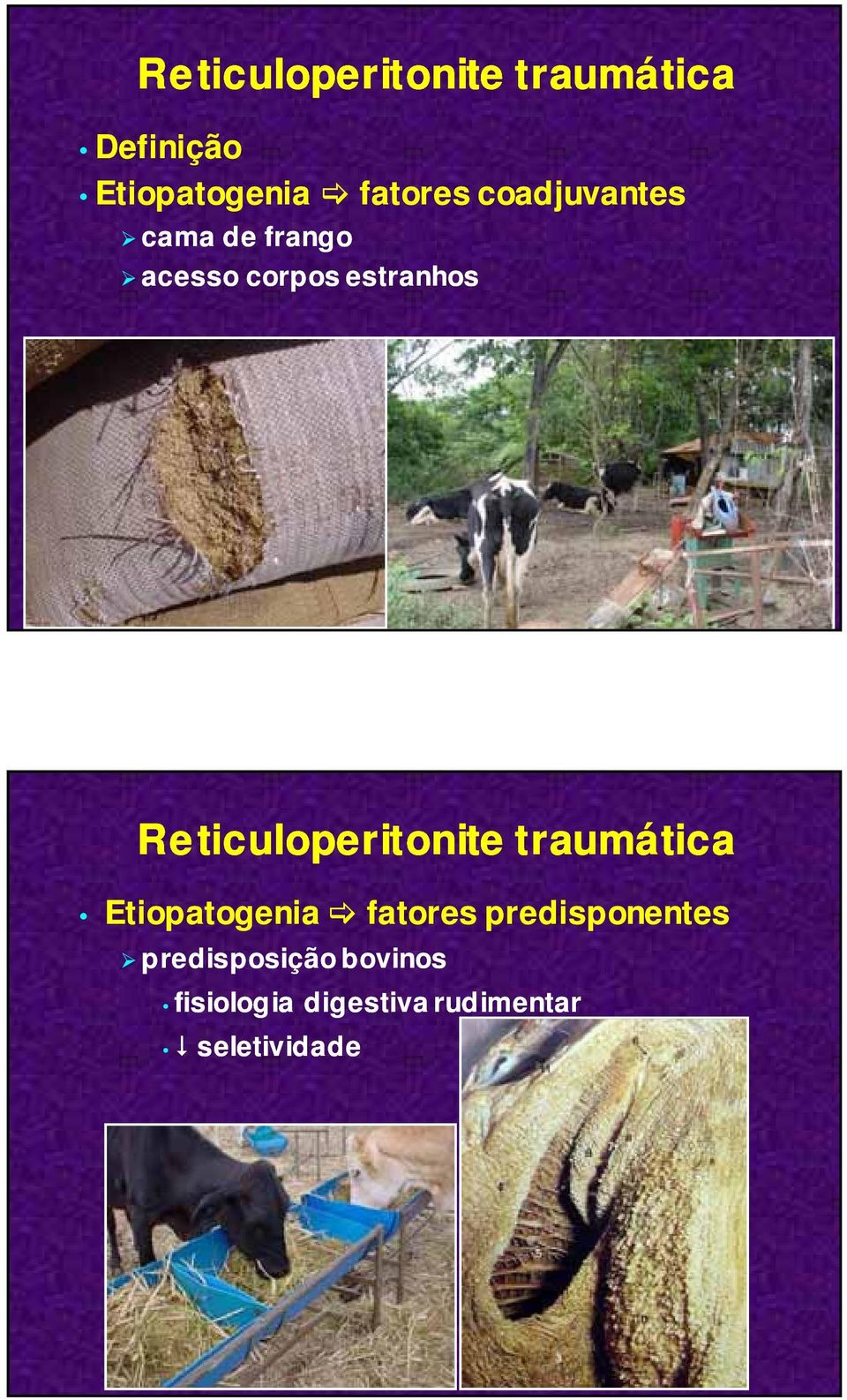 Reticuloperitonite traumática Etiopatogenia fatores