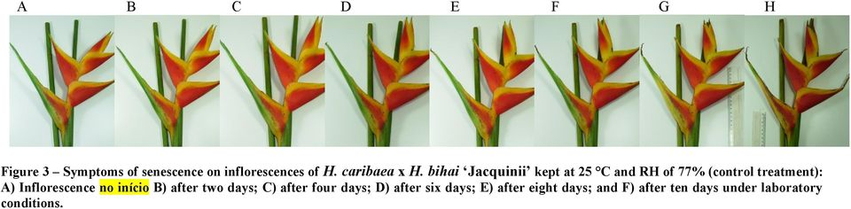 bihai Jacquinii kept at 25 C and RH of 77% (control treatment): A)