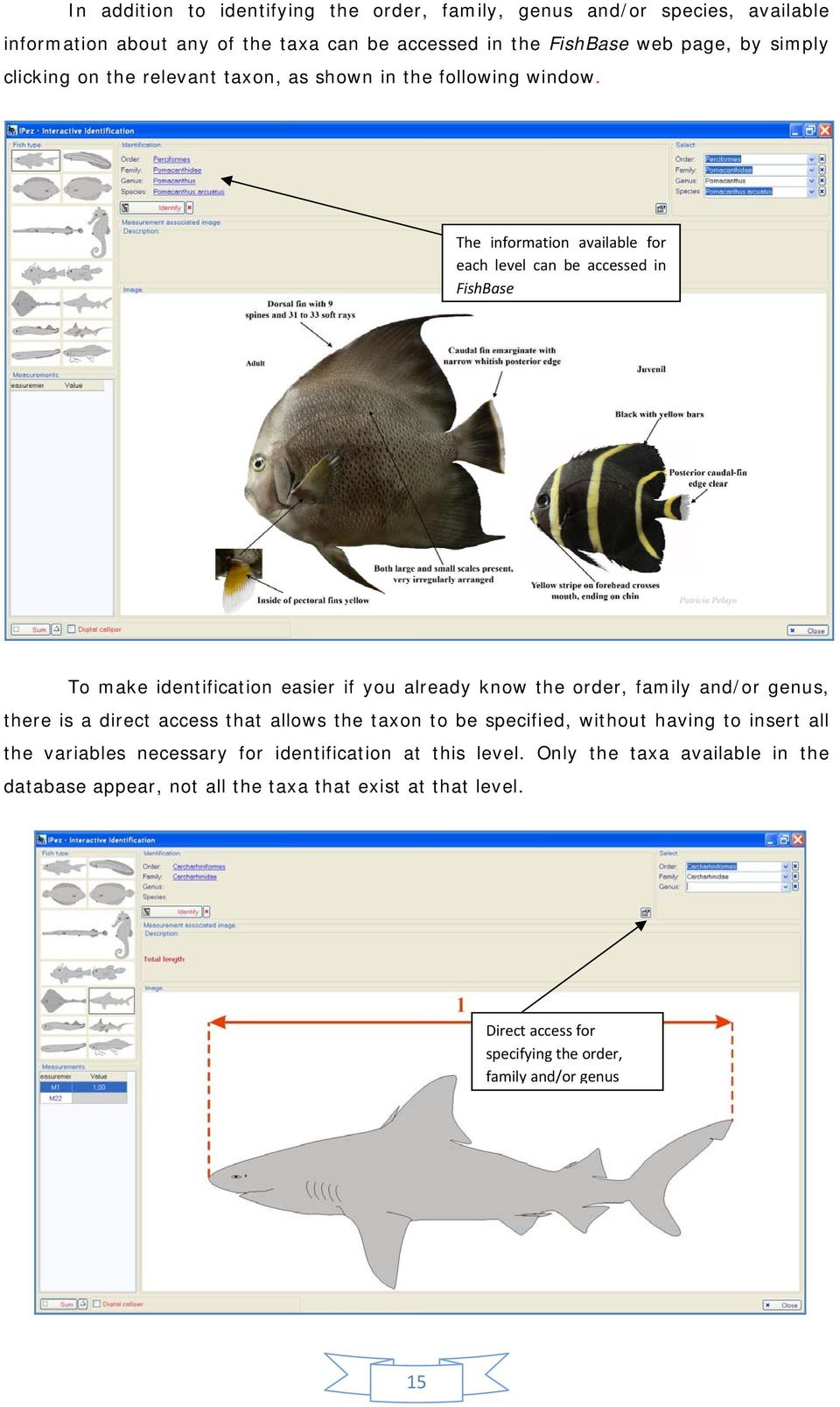 The information available for each level can be accessed in FishBase To make identification easier if you already know the order, family and/or genus, there is a direct