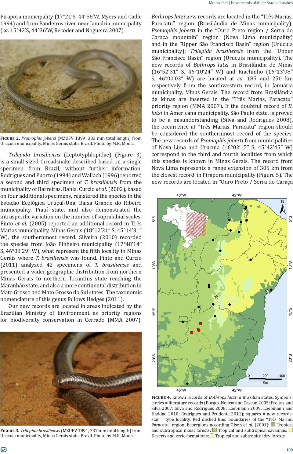 Trilepida brasiliensis (Leptotyphlopidae) (Figure 3) is a small sized threadsnake described based on a single specimen from Brazil, without further information.