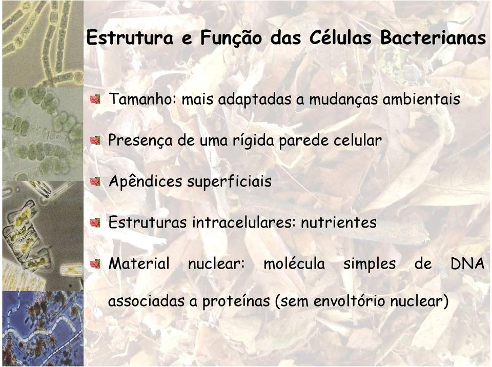superficiais Estruturas intracelulares: nutrientes Material nuclear:
