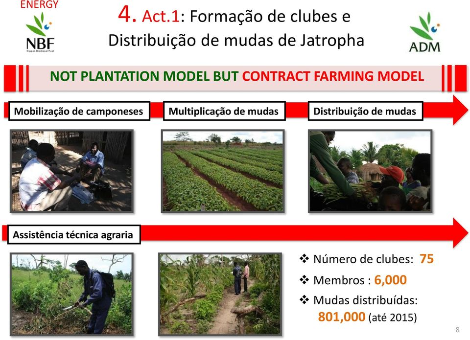 MODEL BUT CONTRACT FARMING MODEL Mobilização de camponeses Multiplicação