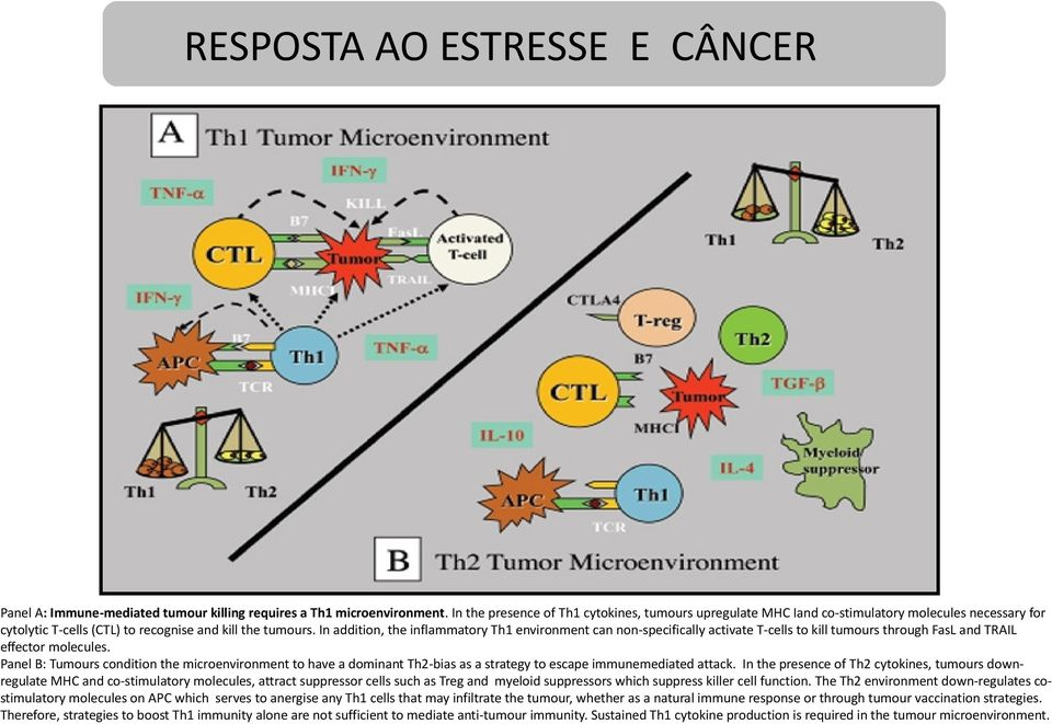 In addition, the inflammatory Th1 environment can non-specifically activate T-cells to kill tumours through FasL and TRAIL effector molecules.