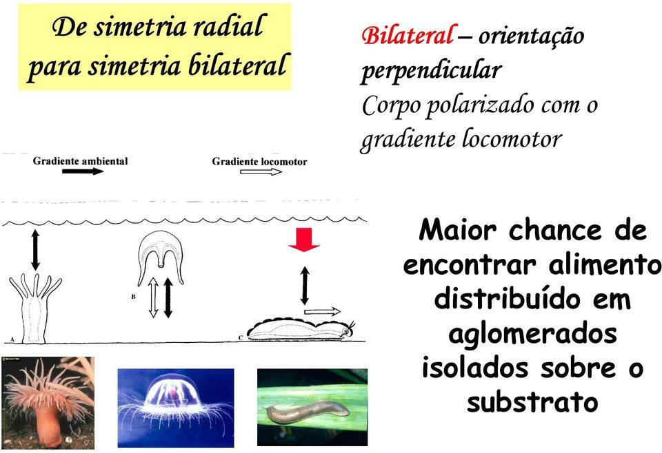 gradiente locomotor Maior chance de encontrar