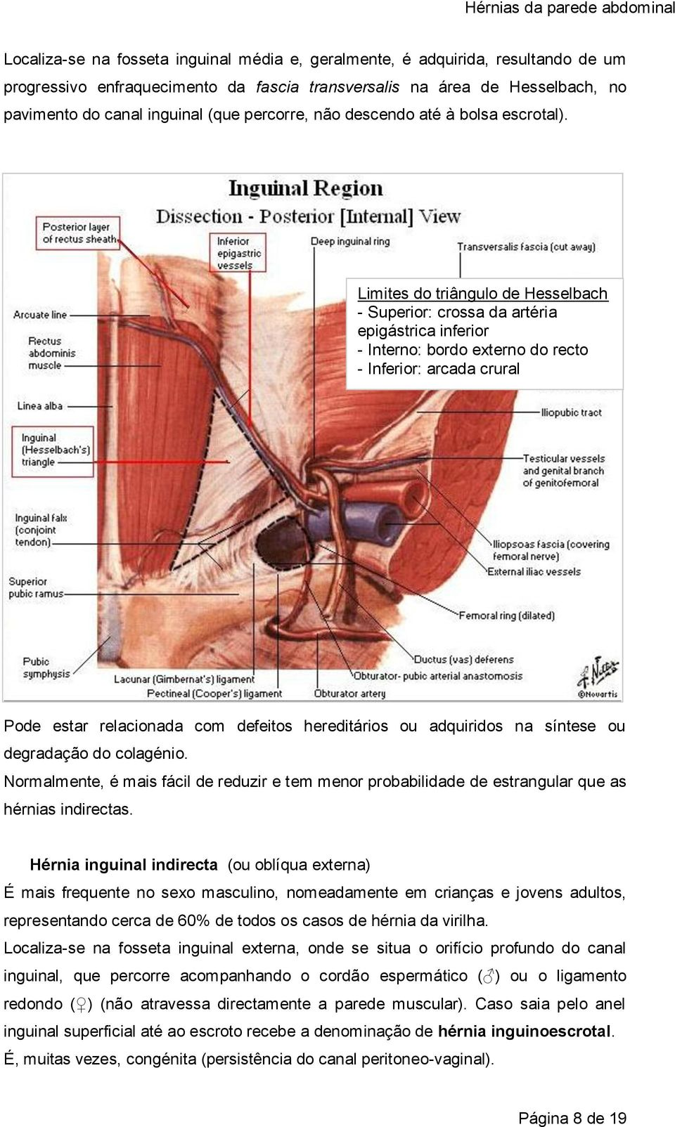 Limites do triângulo de Hesselbach - Superior: crossa da artéria epigástrica inferior - Interno: bordo externo do recto - Inferior: arcada crural Pode estar relacionada com defeitos hereditários ou