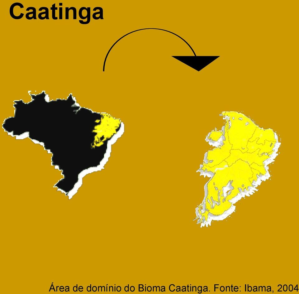 Bioma Caatinga.