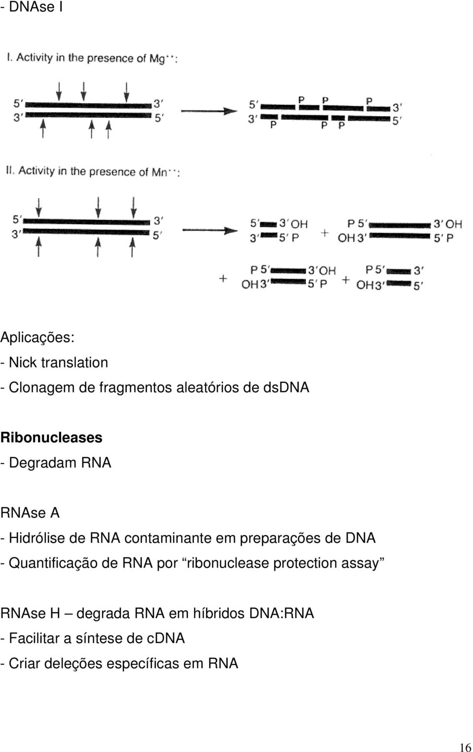 de DNA - Quantificação de RNA por ribonuclease protection assay RNAse H degrada RNA