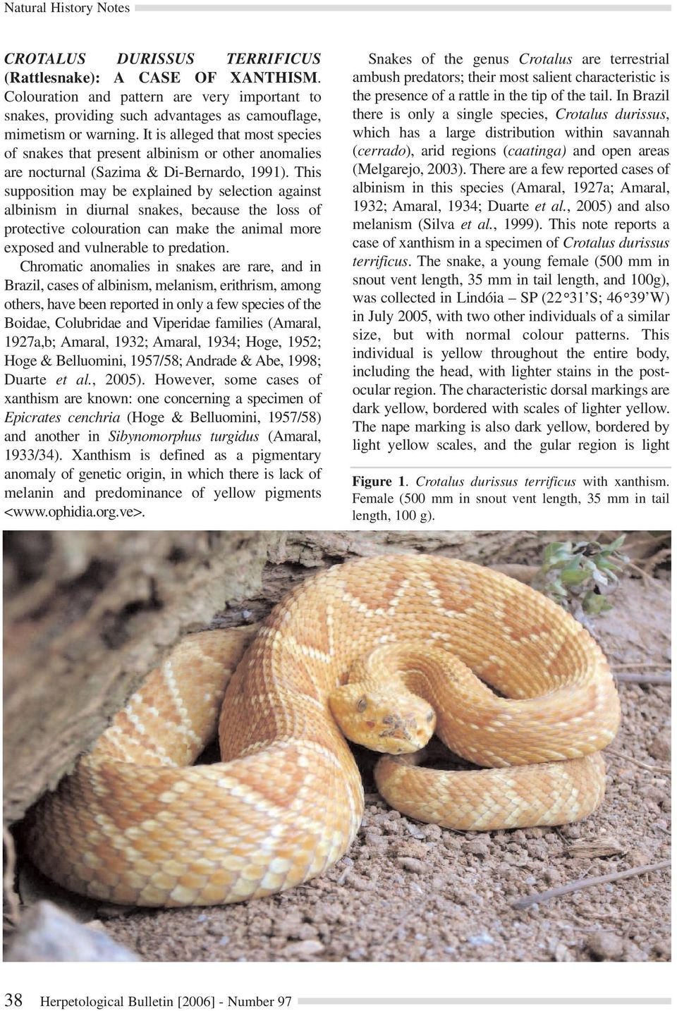 This supposition may be explained by selection against albinism in diurnal snakes, because the loss of protective colouration can make the animal more exposed and vulnerable to predation.