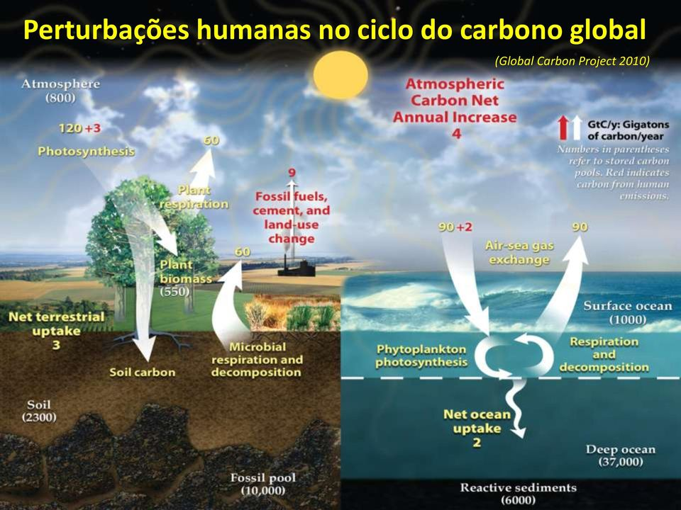 do carbono global