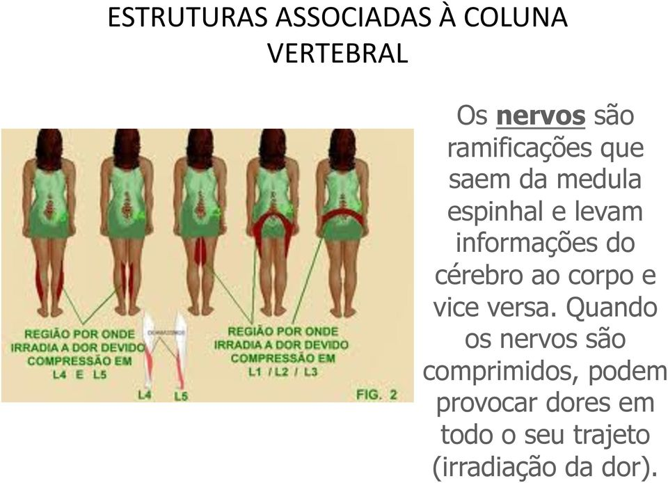 do cérebro ao corpo e vice versa.