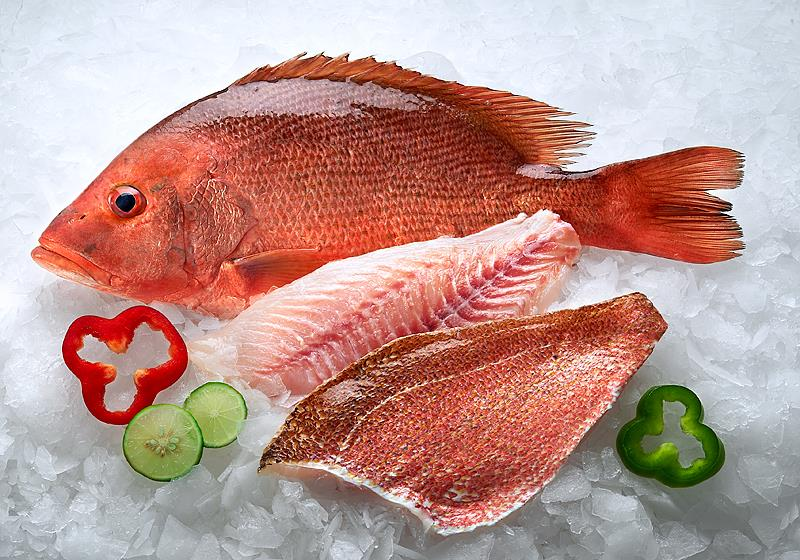 RED SNAPPER (Lutjanus argentimaculatus)