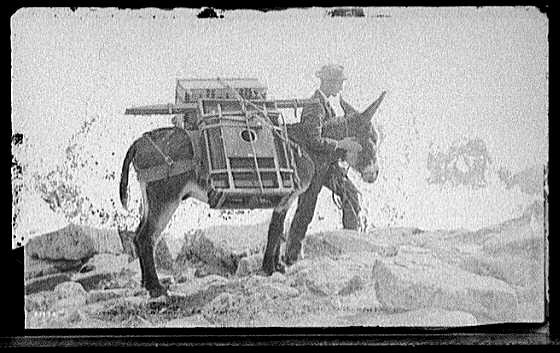 A mule carries William Henry