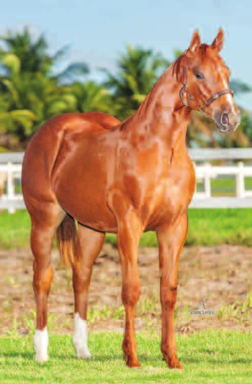 Lote 20B HOLLAND S ROJO RD Macho Alazão 30/09/13 HOLLAND S BOY TEQUILA TOP ROJO HOLLAND EASE GOOD SOUND PRINCIPE ROJO LADY TOP BID FIRST DOWN DASH EASY HENRYETTA SUPER SOUND CHARGE MISS GALLANT EL
