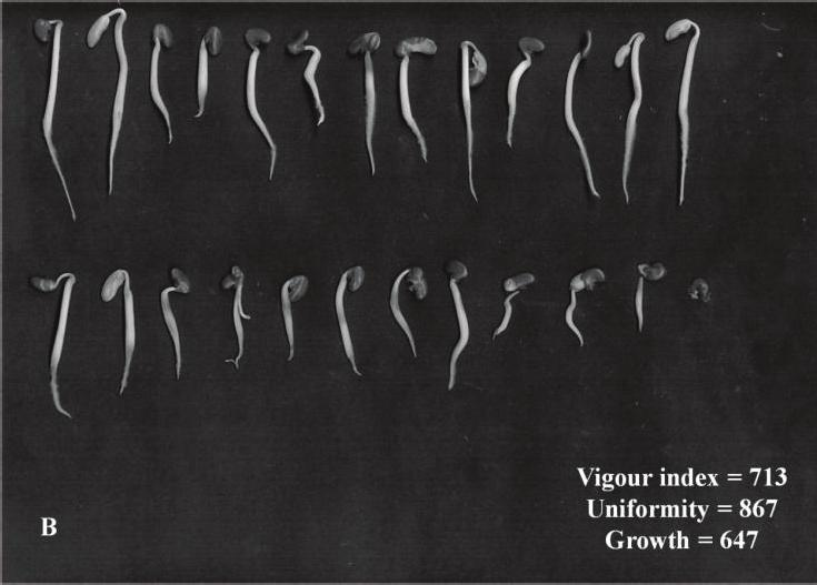 Lots Vigor index (3 days) Growth uniformity (3 days) (*) Comparison of means within each column (Tukey test, p 0.